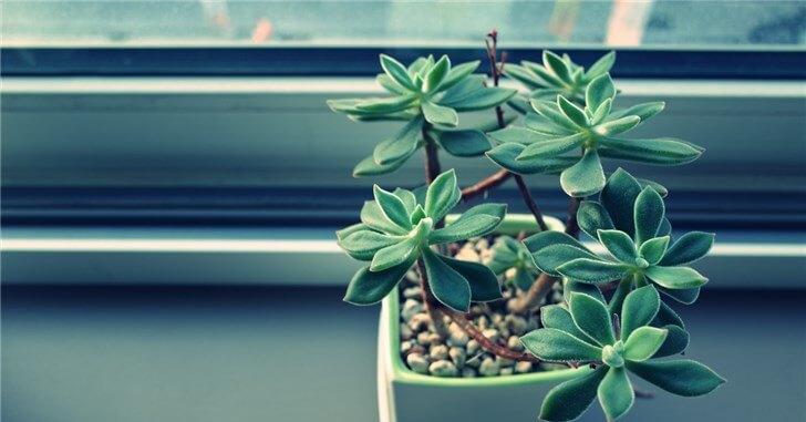 植物が私に教えてくれた3つのこと