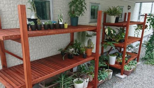 南側に植物棚をDIYで作りました!
