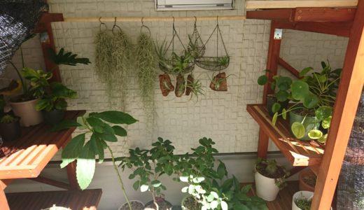 チランジアが大きく成長した育て方と環境